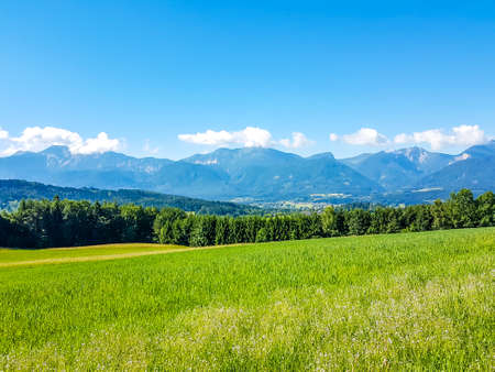 A panoramic view on an alpine landscape of Austria. Lush green meadow spreads on a vast surface. There are high Alps in the back. Few trees on the side, forming a small forest. Idyllic landscape.