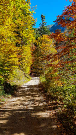 A gravelled road leading through a forest changing colors for autumn. The trees along the road have red, orange, yellow and green leaves. Warm and sunny day. Serenity and calmness. Forest meditation 스톡 콘텐츠