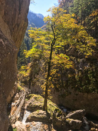 An autumn vibes in Baerenschuetzklamm in Austrian Alps. The area is lite up by sunbeams. Tall cliff of the gorge going sharp up. The trees in the gorge are turning golden. Serenity and calmness.