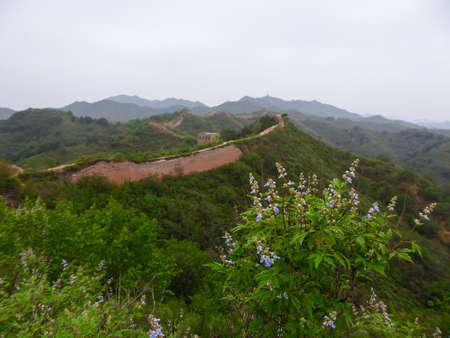 A bunch of wild flowers growing along an unrenewed Gubeikou part of Great Wall of China. The wall is spreading on tops of mountains. Many watchtowers on the peaks. Dense forest around it. World wonder