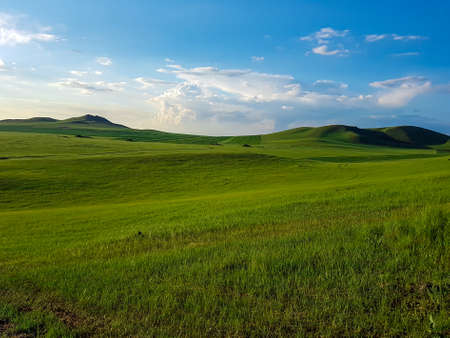 A panoramic view on a hilly landscape of Xilinhot in Inner Mongolia. Endless grassland with a few wildflowers between. Blue sky with thick, white clouds. Higher hills in the back. Mongolian grassland 免版税图像