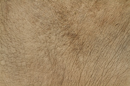 Elephant Skin background and texture close up
