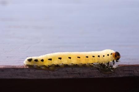 Caterpillar Reklamní fotografie