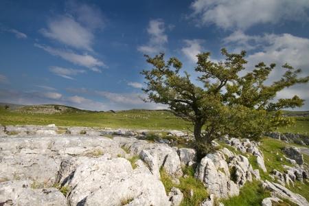yorkshire dales: �rbol de Ingleborough Yorkshire Dales con pavimento de piedra caliza Foto de archivo