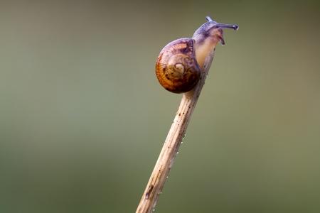 Snail Garden snail crawling on a stem Reklamní fotografie