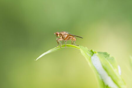 Fly on a leaf closeup macro shot Stock Photo - 14575087