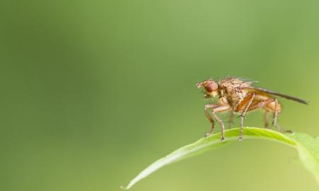 Fly on a leaf closeup macro shot Stock Photo - 14575041