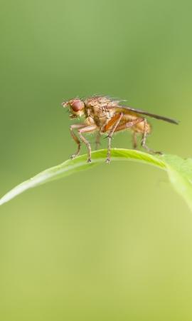 compound eye: Fly on a leaf closeup macro shot Stock Photo