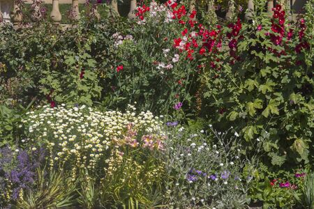 herbaceous: A beautiful close-up shot of a herbaceous flower bed