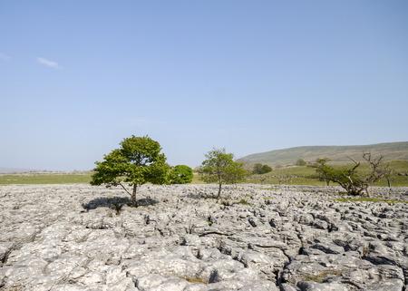dales: Limestone Pavement  Landscape , Ingleborough Yorkshire dales