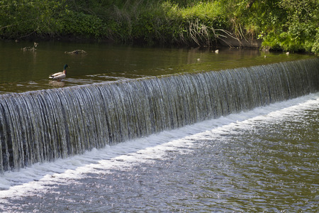 weir cascades down stream with a duck looking on