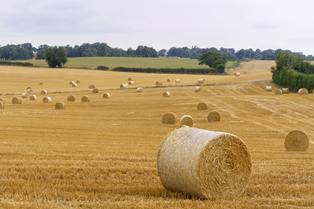 Straw bales in a farm field