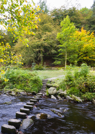 Autumn Trees with stpping stones in stream