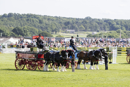 shire horse: Harrogate, North Yorkshire, UK. 15th July, pairs section of the Heavy Horses at the Great Yorkshire Show 15th July, 2015 at Harrogate in North Yorkshire,  England