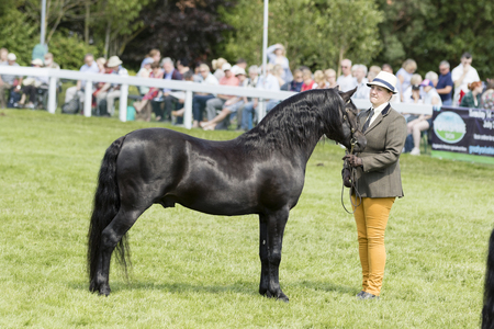 judging: Harrogate, North Yorkshire, UK. 15th July, Judging Horses at the Great Yorkshire Show 15th July, 2015 at Harrogate in North Yorkshire,  England Editoriali