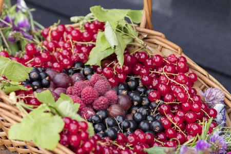 azucar: frutas de verano. grosellas rojas, grosellas negras, frambuesas, grosella.