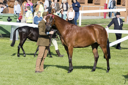 judging: Harrogate, North Yorkshire, UK. 15th July, Judging Horses at the Great Yorkshire Show 15th July, 2015 at Harrogate in North Yorkshire,  England Editorial