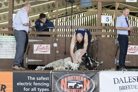 entrants: Harrogate, North Yorkshire, UK. 15th July, sheep shearing competition at the Great Yorkshire Show 15th July, 2015 at Harrogate in North Yorkshire,  England