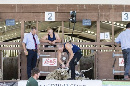 adversary: Harrogate, North Yorkshire, UK. 15th July, sheep shearing competition at the Great Yorkshire Show 15th July, 2015 at Harrogate in North Yorkshire,  England