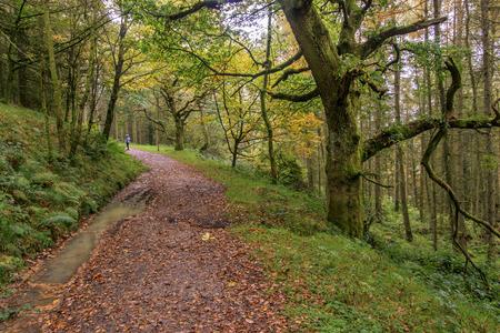Herbstwaldweg in Wales, Großbritannien.