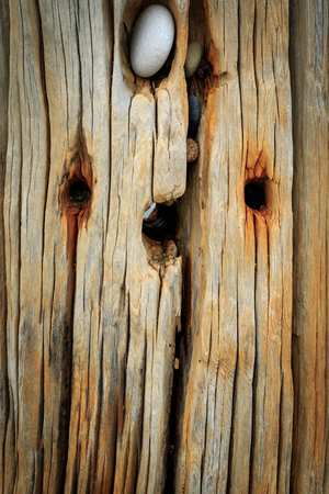 groynes: Wooden groynes on the beach at spurn point