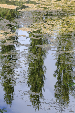 Reflection of trees in the still waters of a lake Standard-Bild