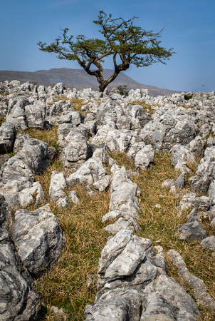 limestone pavement in the yorkshire dales UK