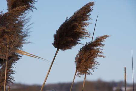 野草: 鮮明な野草 写真素材