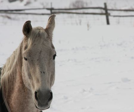 A nice photo of a horse looking straight ahead