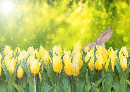 黄色のチューリップと緑豊かな緑の背景のボケ味のイースターバニー バナー イースター春のシーズン 写真素材 - 74776473