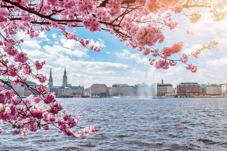view of Alster Lake in Hamburg framed by blooming cherry tree on beautiful sunny spring day Banque d'images