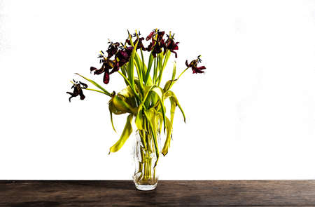 faded tulips in glass flower vase on rustic wooden table against white wall Stock Photo