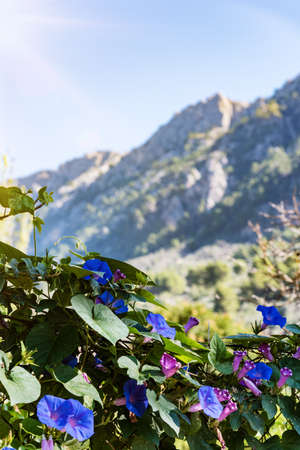 flowering plant against Serra de Tramuntana mountains and clear sky