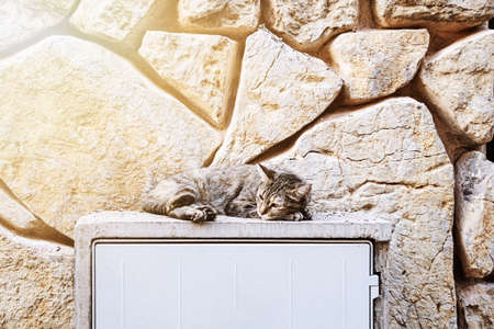 young cat relaxing outdoors  in front of natural stone wall Фото со стока