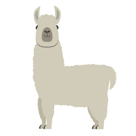 cute fluffy alpaca or llama isolated on white background vector illustration