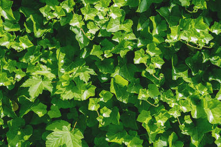 close-up of lush green foliage or leafage background