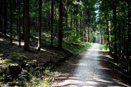 empty path or road through dark thick forest on summer day