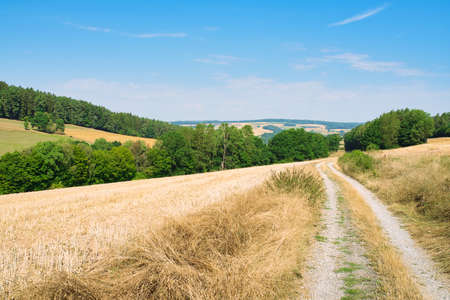gravel road through fields in hilly landscape on sunny summer day