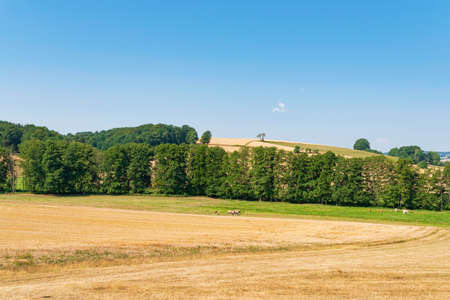 extensive hilly landscape with fields, meadows and forests in Rhoen Mountains region of Germany on clear summer day