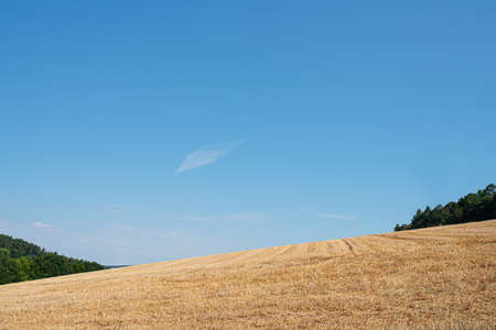 harvested wheatfield in hilly landscape against clear blue summer sky