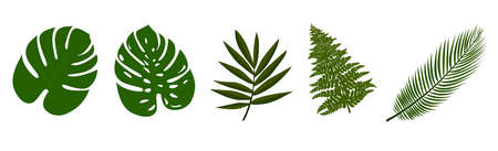 collection of tropical leaves isolated on white vector illustration Illustration