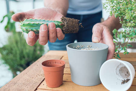 close-up of person repotting cactus at wooden table on porch Banque d'images