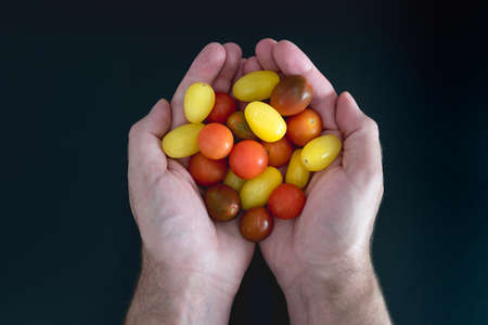 directly above view of hands holding colorful small cherry tomatoes