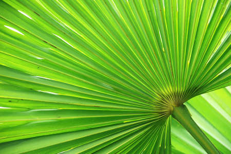 leaf close up: Palm Leaf