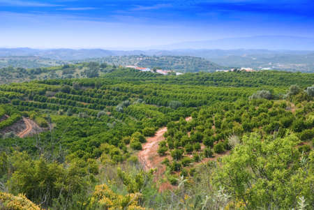Fruit tree plantation in the Algarve hills, Portugal photo