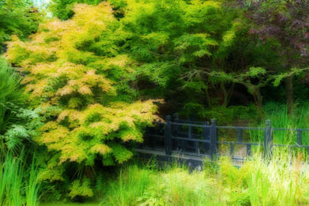 A wooden walkway leads to a mysterious secret garden - filtered effect photo