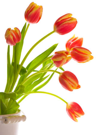 Tulip display isolated on a white background photo