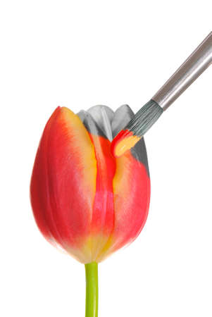 Duo coloured image of a tulip being painted photo