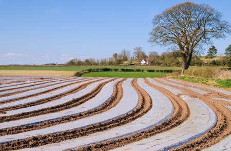 Cultivos protegidos por láminas de polietileno, durante principios de la primavera, Shropshire, Reino Unido Foto de archivo - 4581037