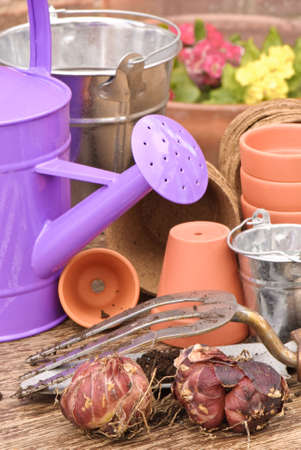Spring planting bulbs with watering can in rustic setting photo